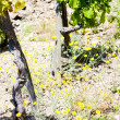 Grand cru vineyards, Cote Rotie, Rhone-Alpes, France — Stock Photo #19620133