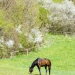 Horse on meadow — Stock Photo #19621069