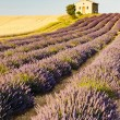 Chapel with lavender and grain fields, Plateau de Valensole, Pro - Stock Photo