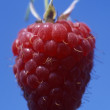 Raspberry — Stock Photo