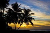 Sunset over Caribbean Sea, Turtle Beach, Tobago — Stock Photo