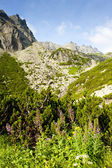 Great Cold Valley, Vysoke Tatry (High Tatras), Slovakia — Stock Photo
