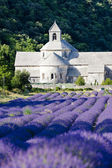 Abadía de senanque con campo de lavanda, provence, francia — Foto de Stock