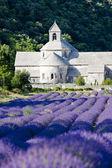 Abbaye de sénanque avec champ de lavande, provence, france — Photo