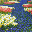 Keukenhof Gardens, Lisse, Netherlands — Stock Photo #20003807
