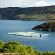 Salmon farm, Loch a Chairn Bhain, Highlands, Scotland — Stock Photo #20781207