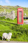 Telephone booth with sheep, Clashnessie, Highlands, Scotland — Stockfoto