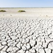 Stock Photo: Dry land, Parc Regional de Camargue, Provence, France