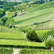 Stock Photo: Vineyars near Barbaresco, Piedmont, Italy
