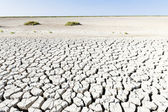 Dry land, Parc Regional de Camargue, Provence, France — Stock Photo