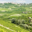 Stock Photo: Vineyars, Piedmont, Italy