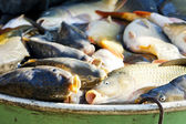 Fish in vat during harvesting pond — Stock Photo