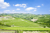 Vineyars near Grinzane Cavour, Piedmont, Italy — Stock Photo