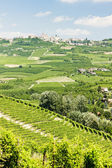Vineyars, Piedmont, Italy — Stock Photo