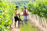 Bikers in vineyard, Czech Republic — Stock Photo