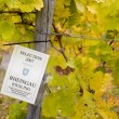 Vineyard (riesling), Germany — Stock Photo