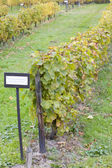 Alterar rhg. drahtrahmen mit festen drahten, eberbach, hessen, alemania — Foto de Stock