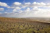 Vignobles de la région champagne, bourgogne, france — Photo