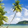 Batteaux Bay, Tobago — Stock Photo #25051109