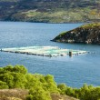 Salmon farm, Loch a Chairn Bhain, Highlands, Scotland — Stock Photo #25051319