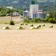 Field with straw bales, Drome Department, Rhone-Alpes, France - Stock Photo
