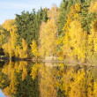 Autumnal pond, Czech Republic — Stock Photo #25790237