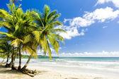 Rockly Bay, Tobago — Stock Photo