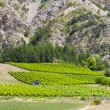 Stock Photo: Vineyards, Drome Department, Rhone-Alpes, France