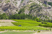 Vineyards, Drome Department, Rhone-Alpes, France — Stock Photo