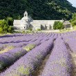 Senanque abbey with lavender field, Provence, France — ストック写真