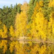 Stock Photo: Autumnal pond, Czech Republic