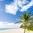 Foul Bay, Barbados, Caribbean — Stock Photo #31086143