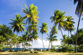 Granby Point, Tobago — Stock Photo