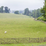 Landscape with sheep, Stowe, Buckinghamshire, England — Stock Photo