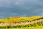 Landscape near St Andrews, Fife, Scotland — Stock Photo