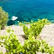 Vineyard on Cap de Peyrefite near Cerbere, Languedoc-Roussillon, — Stock Photo