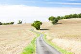 Pole z drogi, w departamencie gers, francja — Zdjęcie stockowe