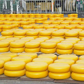 Cheese market, Alkmaar, Netherlands — Stock Photo