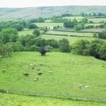 Góry Sperrin, powiat Tyrone, Irlandia Północna — Zdjęcie stockowe