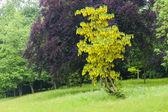 Stowe, Buckinghamshire, England — Stock Photo