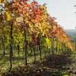 Stock Photo: Vineyard, BizWinery, Cejkovice, Czech Republic