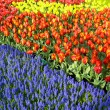 Keukenhof Gardens, Lisse, Netherlands — Stock Photo #38281681