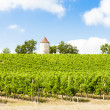 Vineyard with windmill near Ribagnac, Dordogne Department, Aquit — Stock Photo #38333431
