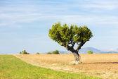 Field with a tree, Plateau de Valensole, Provence, France — Foto de Stock