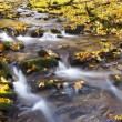 Stock Photo: Brook in autumn