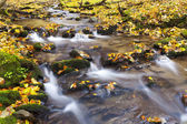 Brook in autumn — Stock Photo