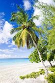 Kurumsal beach — Stok fotoğraf