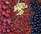 Currant and raspberries — Stock Photo