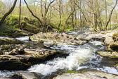 Spring landscape with Vyrovka brook — 图库照片