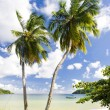 Batteaux Bay, Tobago — Stock Photo #43955539